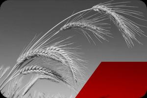 grain-and-oilseed